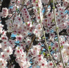 pomlad-3